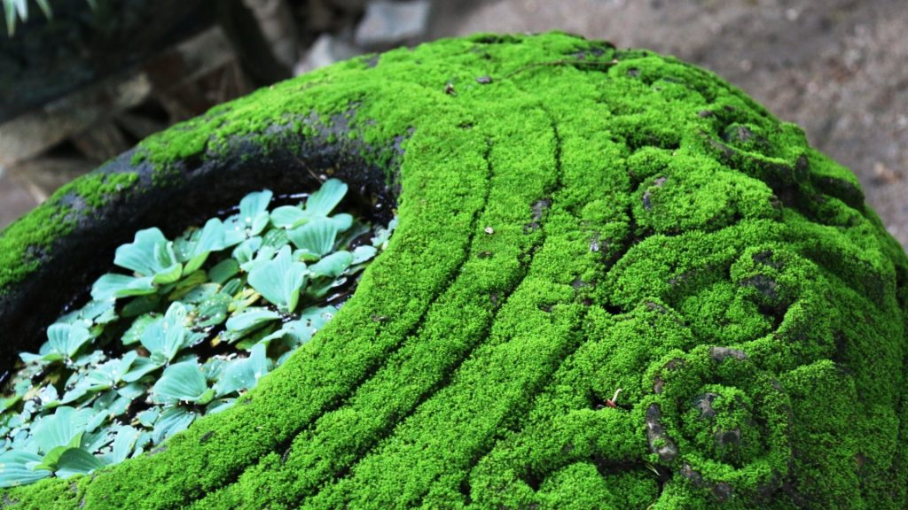 Moss covered pot